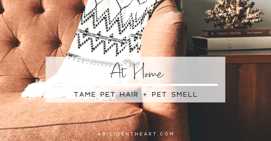 Tame Pet Hair + Pet Smell In Your Home